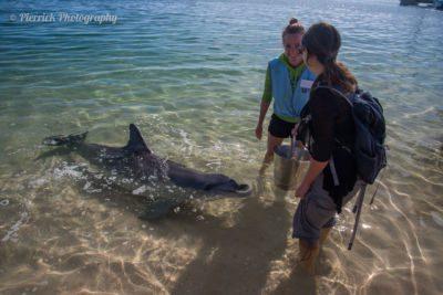 Réaliser un rêve d'enfant : approcher les dauphins à Monkey Mia