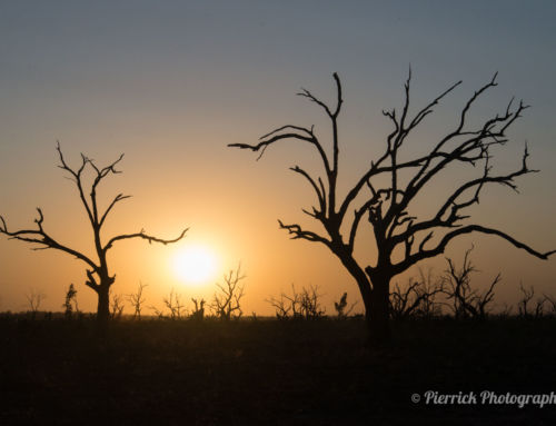 Atmosphère de fin du monde autour du parc national Kinchega