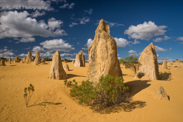 Pinnacles dans le parc national de Nambung en Western Australia