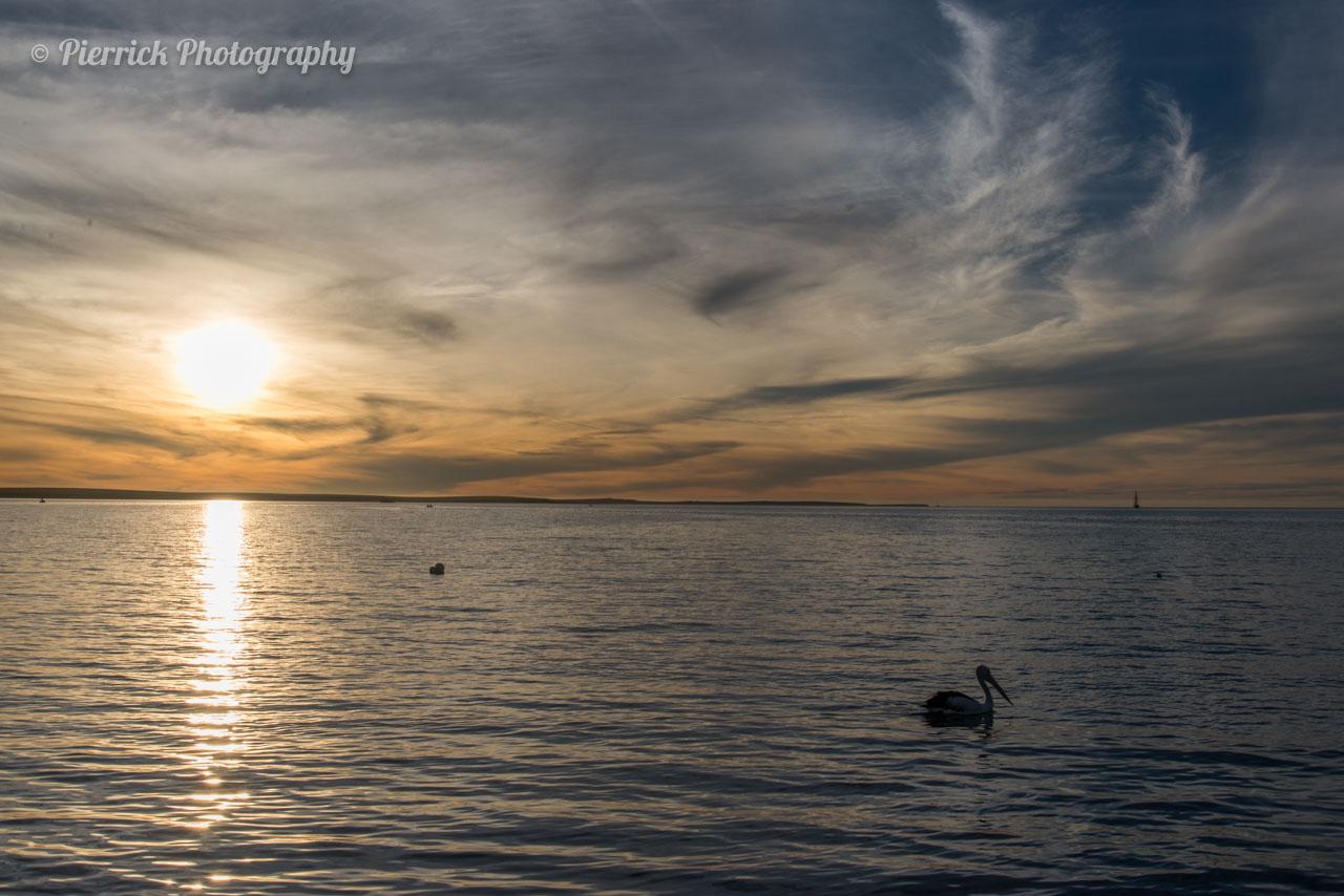 Pélican sur la péninsule de Shark bay