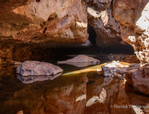 Face à face inattendu dans la pénombre de Tunnel Creek