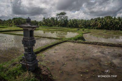 Ubud : l'envers du décor