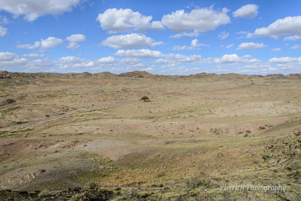 Arbre isolé au milieu des steppes en Mongolie