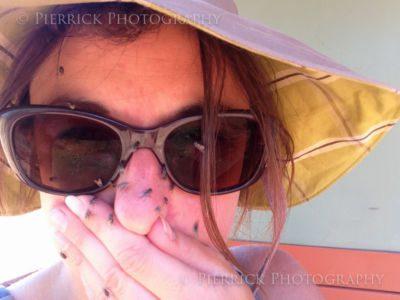Mouche dans le désert en Australie