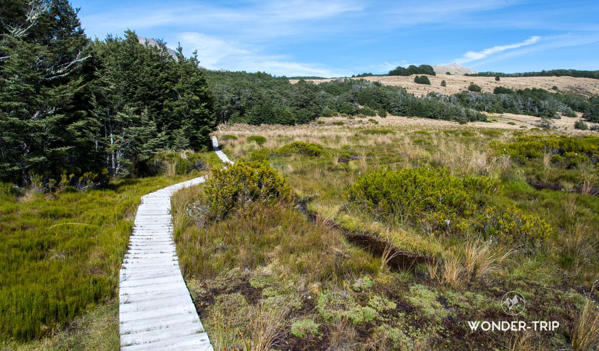 Randonnée de Bealey spur - Arthur's pass