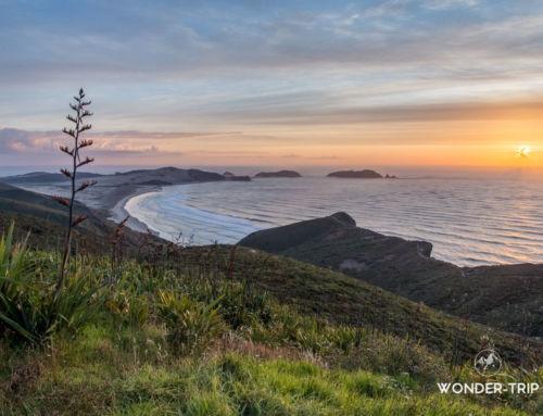 Cap Reinga : road trip jusqu'à l'extrême nord de la Nouvelle-Zélande – Far North