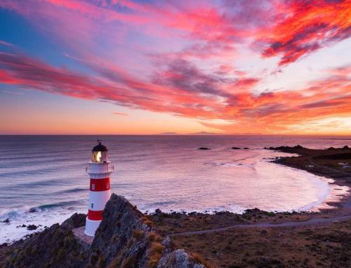 Cape Palliser : ses colonies d'otaries et sa route panoramique