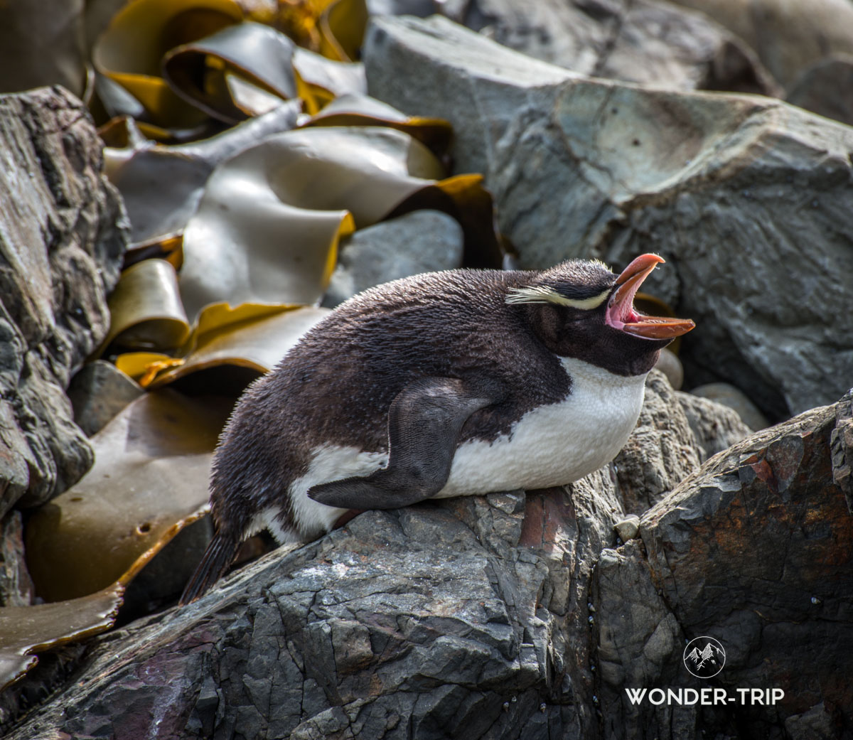 Snare penguin