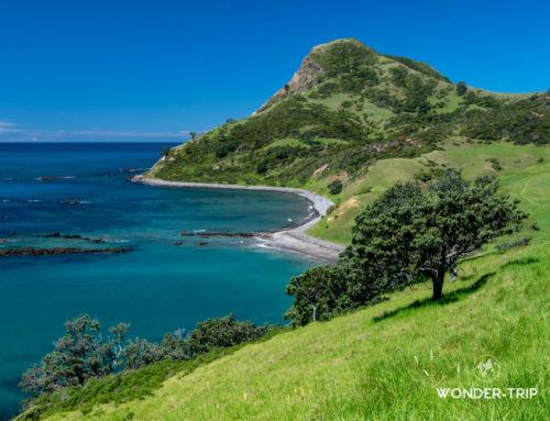 Far North Coromandel : paradis sauvage de la pointe nord du Coromandel