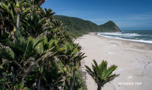 Plage bordé de palmier Nikau sur la randonnée de Heaphy - Great walk