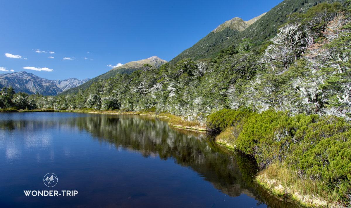 Lewis Pass randonnées - Alpine Nature