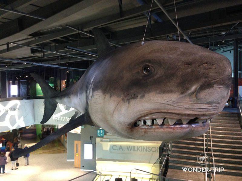 Visiter le musée Puke Ariki