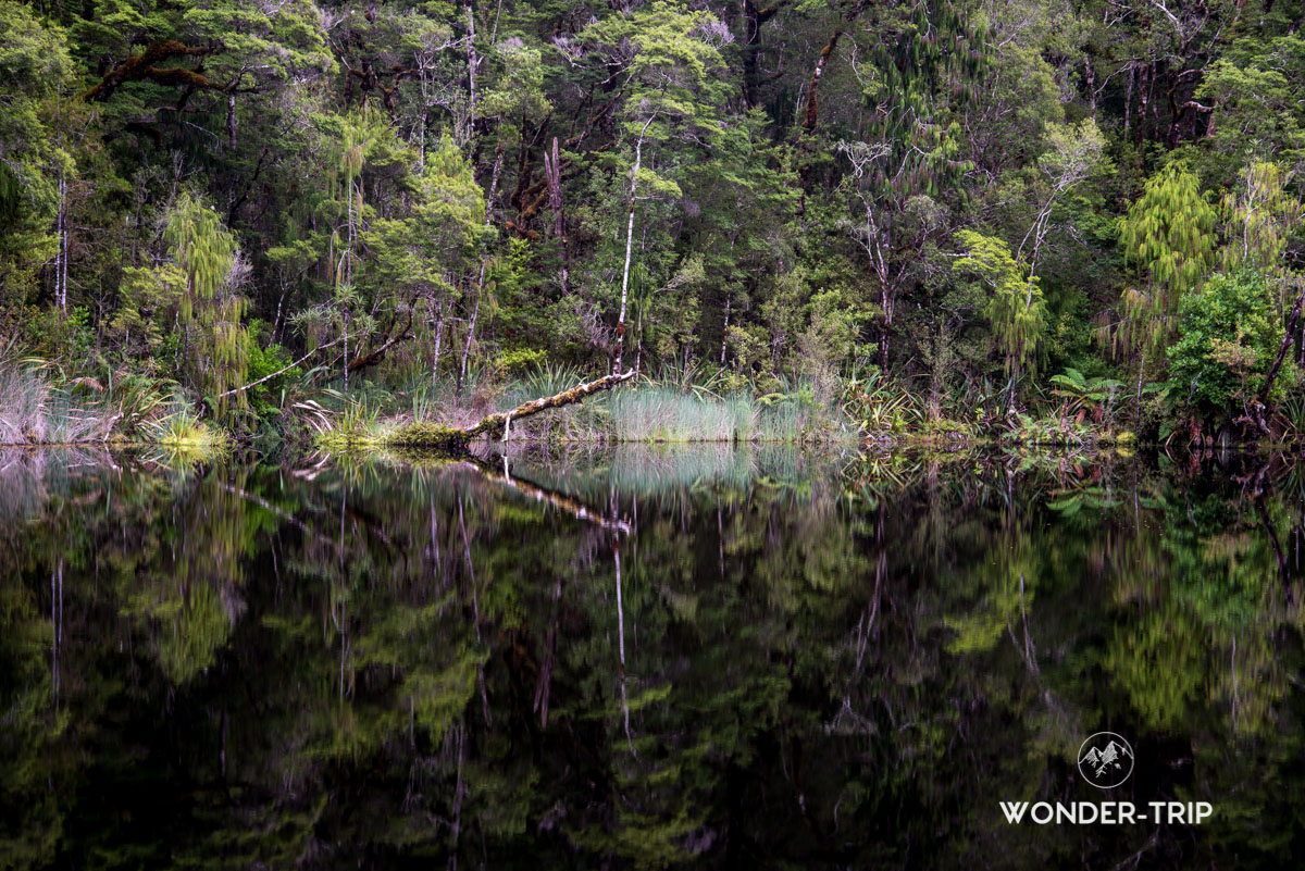 Oparara basin