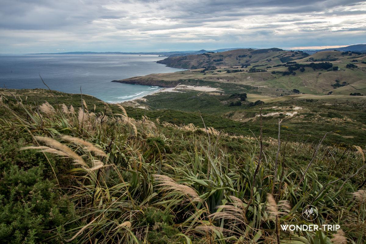 Quoi faire sur la péninsule Otago - Randonnée de Sandymount