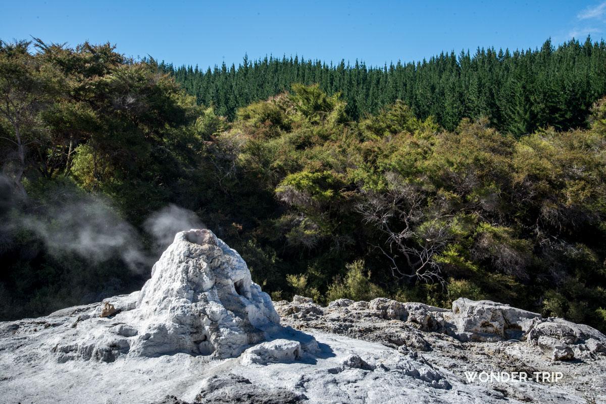 Lady knox geyser - Wai-O-Tapu