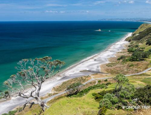 Whangarei : Guide pour visiter la région et la côte de Tutukaka – Matapouri